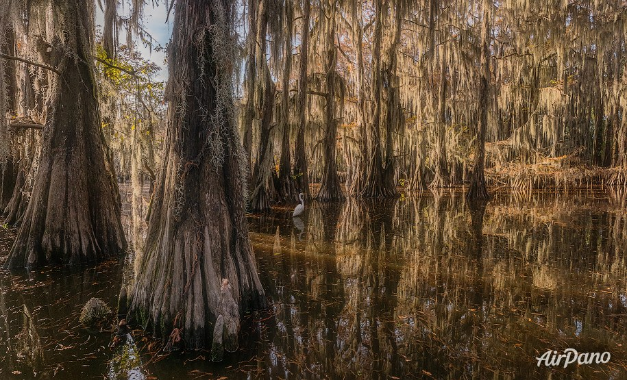 Bald cypress swamps, Louisiana-Texas, USA