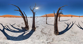 Trees of the Dead Vlei