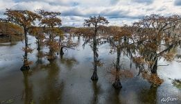 Cypress grove in Texas
