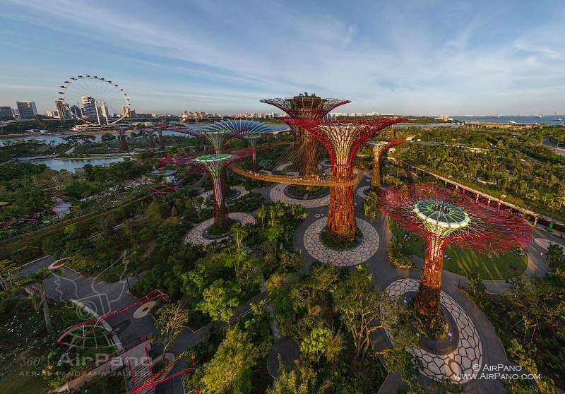 Supertree Grove (Gardens of the Bay)