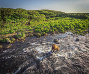 Bear in the Kambalnaya river #6