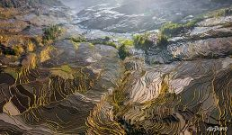 Yuanyang rice terrace