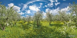 Panorama of the Dyakovsky Apple Orchard