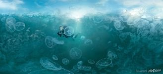 In gulf of jellyfishes